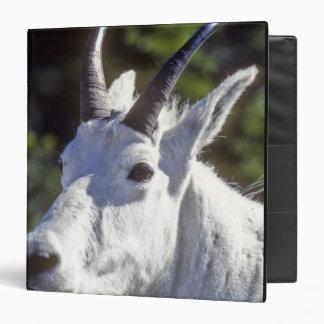 """Cabra de montaña, Oreamnos americanus, en glaciar Carpeta 1 1/2"""""""