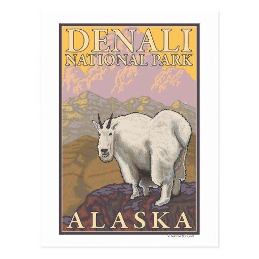 Cabra de montaña - parque nacional de Denali, Tarjeta Postal