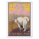 Cabra de montaña - Parque Nacional Glacier, TA Tarjeton
