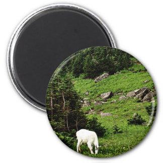 Cabra de montaña que pasta imán redondo 5 cm
