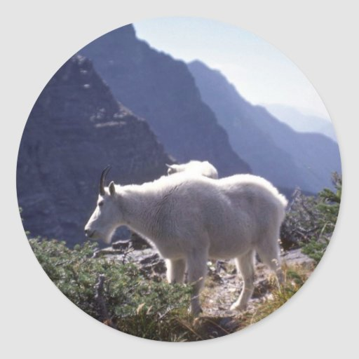 Cabra de montaña rocosa pegatina redonda