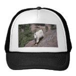Cabra de montaña rocosa (rastro de siguiente mascu gorras de camionero
