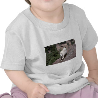 Cabra de montaña rocosa (rastro de siguiente camiseta
