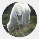 Cabra de montaña rocosa (varón grande) pegatinas redondas