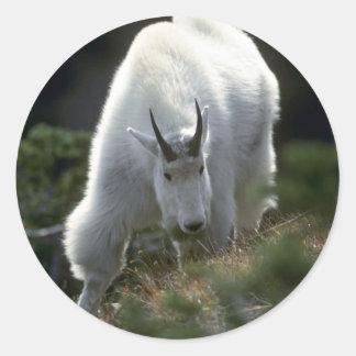 Cabra de montaña rocosa varón grande pegatinas redondas