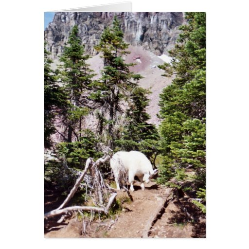 Cabra de montaña tarjeta de felicitación