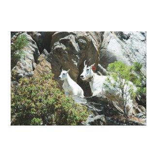 Cabra de montaña y niño - fotografía de la fauna impresión en lienzo
