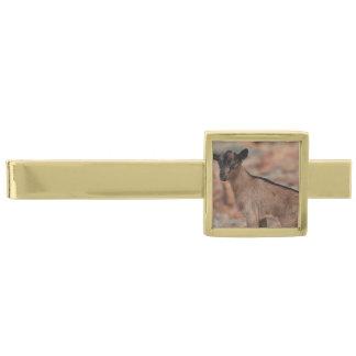 Cabra del bebé alfiler de corbata dorado