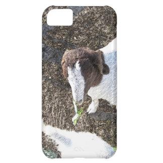 Cabra del bebé con las hojas de la col funda para iPhone 5C