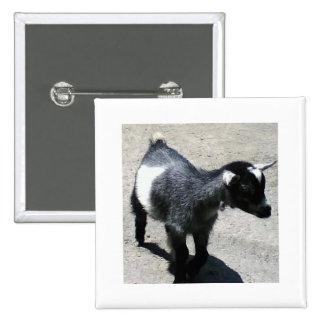 Cabra del bebé pin