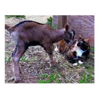 Cabra del bebé y postal del gato