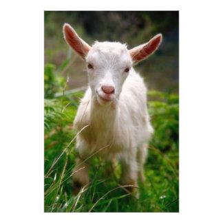 Cabra del niño cojinete