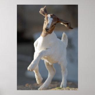 Cabra del niño que juega en tierra impresiones