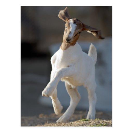 Cabra del niño que juega en tierra postal