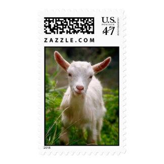 Cabra del niño sello postal