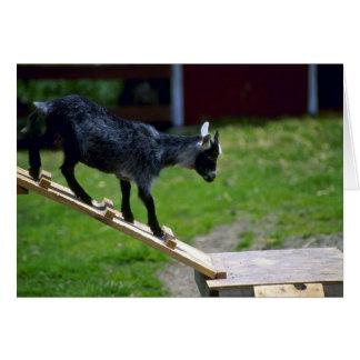 Cabra del Pigmy Tarjeta De Felicitación