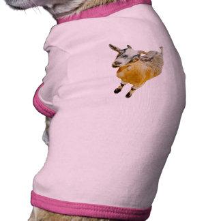 Cabra enana africana camiseta con mangas para perro