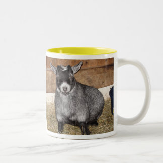 Cabra enana, no persona de la mañana taza dos tonos