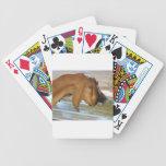 Cabra hambrienta linda baraja cartas de poker