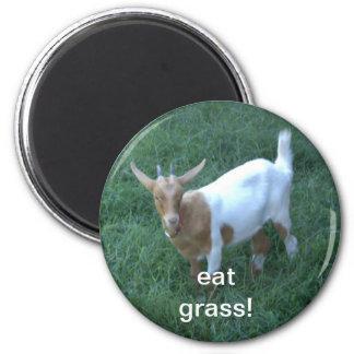 cabra imán de frigorifico