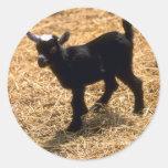 Cabra joven del Pigmy Pegatina Redonda