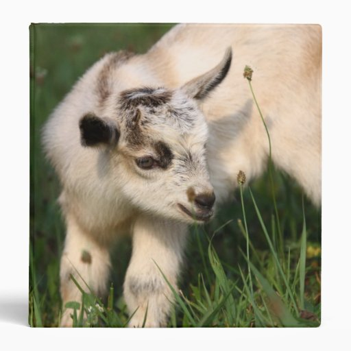 "Cabra linda del bebé carpeta 1 1/2"""