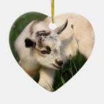 Cabra linda del bebé ornamente de reyes