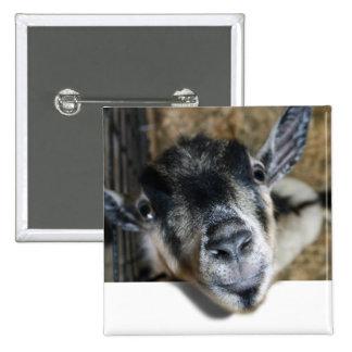 Cabra Nosy que mira hacia fuera Pin Cuadrada 5 Cm
