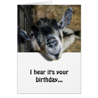 Cabra Nosy que mira para arriba - cumpleaños