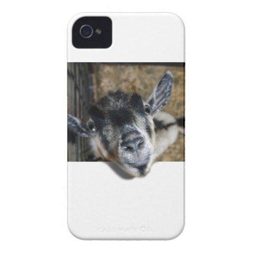 Cabra Nosy que mira para arriba Case-Mate iPhone 4 Carcasa