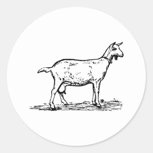 Cabra Pegatina Redonda