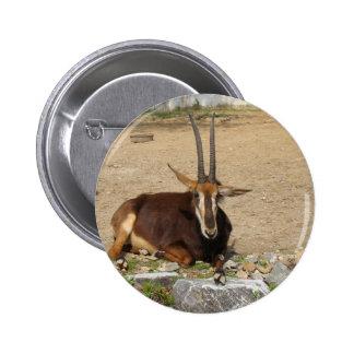 Cabra Pin Redondo De 2 Pulgadas
