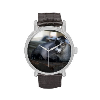 Cabra Reloj