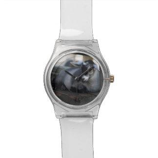 Cabra Reloj De Mano