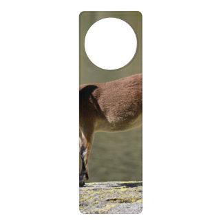 Cabra salvaje femenina joven, cabra montés ibérico colgadores para puertas