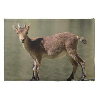 Cabra salvaje femenina joven, cabra montés ibérico manteles individuales