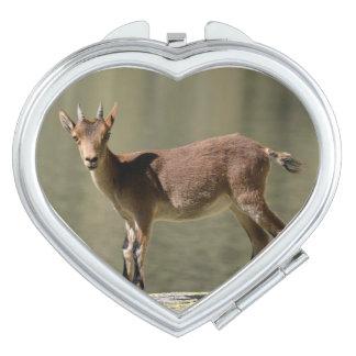 Cabra salvaje femenina joven, cabra montés ibérico espejos de viaje