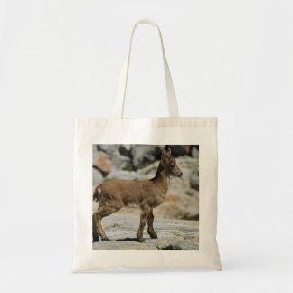 Cabra salvaje masculina joven, cabra montés ibéric bolsas