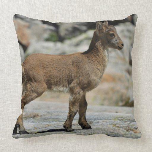 Cabra salvaje masculina joven, cabra montés ibéric cojín