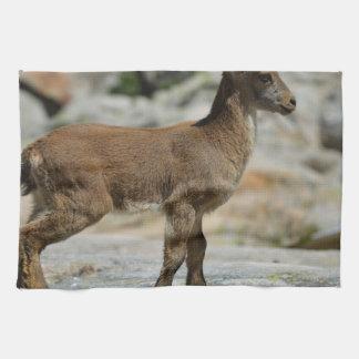 Cabra salvaje masculina joven, cabra montés ibéric toalla de mano
