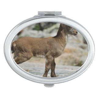 Cabra salvaje masculina joven, cabra montés ibéric espejos compactos