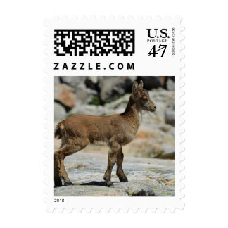 Cabra salvaje masculina joven, cabra montés sellos postales