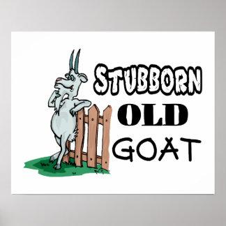 Cabra vieja obstinada póster