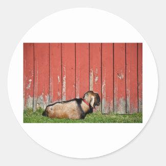 Cabra vieja soñolienta etiquetas redondas