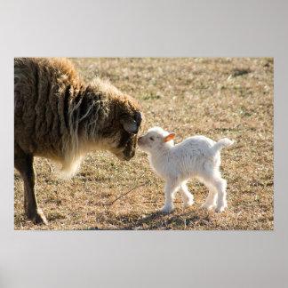 Cabra y su impresión del bebé