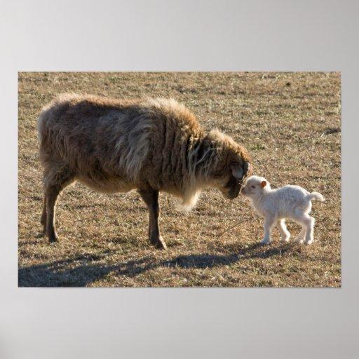 Cabra y su impresión del bebé 2 impresiones