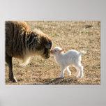 Cabra y su impresión del bebé posters