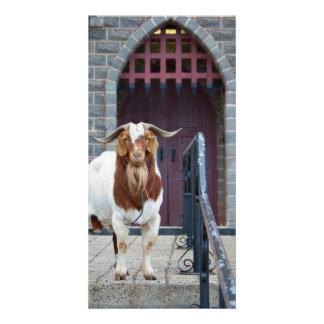 Cabra y tarjeta de Portcullis Tarjetas Fotograficas