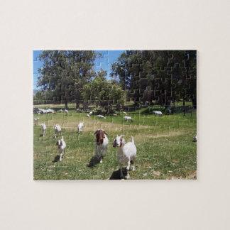 Cabras curiosas rompecabezas con fotos