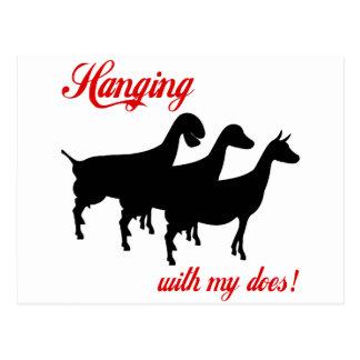 Cabras de la lechería tarjetas postales